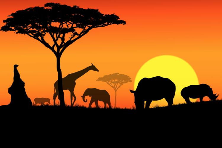 Idiomas africanos. African languages
